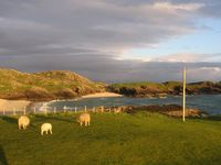 img_2609_sunset_sheep.jpg